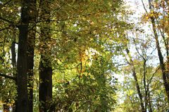 Bright autumn foliage. Bright autumn foliage on trees. Bright aun foliage. Bright aun foliage on trees royalty free stock photography