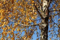 Bright autumn foliage. Bright autumn foliage on trees. Bright aun foliage. Bright aun foliage on trees royalty free stock photo
