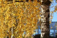 Bright autumn foliage. Bright autumn foliage on trees. Bright aun foliage. Bright aun foliage on trees stock photo