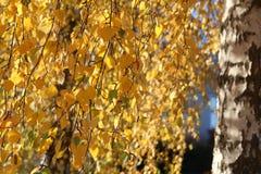 Bright autumn foliage. Bright autumn foliage on trees. Bright aun foliage. Bright aun foliage on trees stock image