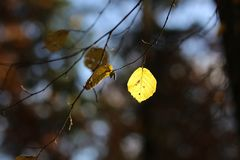 Bright autumn foliage. Bright autumn foliage on trees. Bright aun foliage. Bright aun foliage on trees stock images