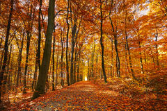 Bright autumn forest Stock Images