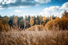 Bright autumn forest, sun glare, a change of seasons, a beautiful landscape stock image