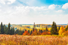 Bright autumn forest Stock Photo