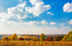 Bright autumn forest Royalty Free Stock Image