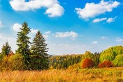 Bright autumn forest Stock Photos