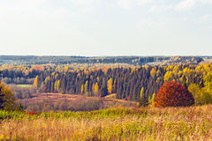 Bright autumn forest Royalty Free Stock Photography