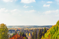 Bright autumn forest Royalty Free Stock Photo