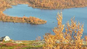 Bright autumn landscape with blue lake and yellow-red vegetation. Yellow autumn aspen bush against the blue of the lake with a small peninsula among low bright stock video