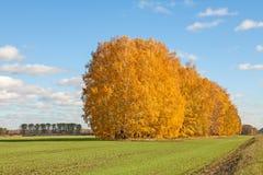 Bright autumn landscape Stock Images