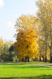Bright autumn landscape. Bright yellow autumn park landscape Royalty Free Stock Images