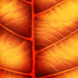 Bright autumn leaf Royalty Free Stock Photos