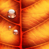 Bright autumn leaf. As background Royalty Free Stock Photo