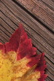 Bright autumn leaf Royalty Free Stock Photography