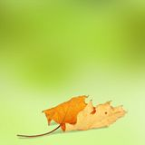 Bright autumn leaves on the abstract background Royalty Free Stock Photo