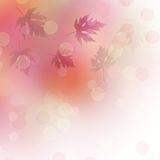 Bright autumn leaves on the abstract background Stock Image