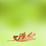 Bright autumn leaves on the abstract background Stock Photos