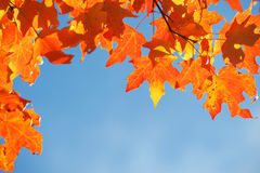 Bright autumn leaves against blue sky. As frame Stock Photo