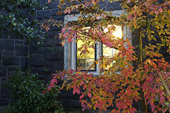 Bright Autumn Leaves Against Lit Window Stock Photography