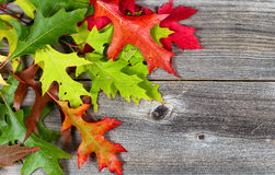 Bright Autumn Leaves on Age Wood Royalty Free Stock Photo