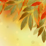Bright autumn leaves with bokeh Stock Photo