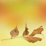 Bright autumn leaves with bokeh Stock Images