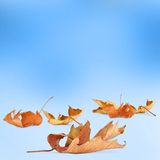 Bright autumn leaves with bokeh Royalty Free Stock Photos