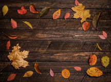 Bright autumn leaves bordering on rustic wooden boards. Round fr. Ame, top view. Colorful autumn leaves on a dark old wood background Stock Photos