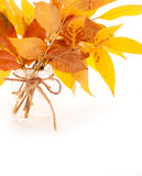 Bright autumn leaves bouquet Stock Photos