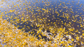 Bright autumn leaves that are covered with frost Stock Photos