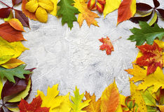 Bright autumn leaves on a grey concrete background. Stock Photos