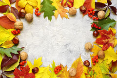 Bright autumn leaves on a grey concrete background. Bright autumn leaves on a grey concrete background with space for text Stock Photography