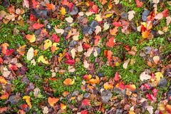 Bright autumn leaves on the ground. Shoot from above Royalty Free Stock Photos