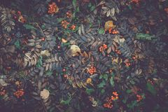 Bright autumn leaves on the ground. Shoot from above Royalty Free Stock Photo