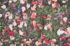 Bright autumn leaves on the ground. Shoot from above Stock Images