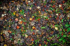 Bright autumn leaves on the ground. Shoot from above Stock Photos
