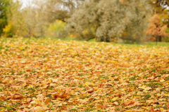 Bright autumn leaves on the ground Stock Image