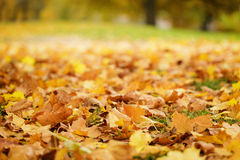Bright autumn leaves on the ground Stock Photo