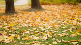 Bright autumn leaves on the ground Stock Photography