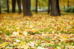 Bright autumn leaves on the ground Royalty Free Stock Image