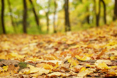 Bright autumn leaves on the ground. Low level photo Royalty Free Stock Photos