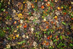 Bright autumn leaves on the ground. Shoot from above Stock Photo