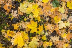Bright autumn leaves on the ground. Shoot from above Royalty Free Stock Images