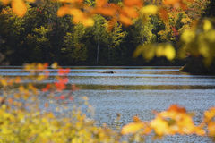 Bright autumn leaves make a window onto Russell Pond. Royalty Free Stock Photography
