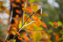 Bright autumn Royalty Free Stock Photography