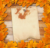 Bright autumn leaves on the old wooden background Stock Images