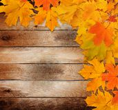 Bright autumn leaves on the old wooden background Stock Photos