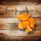 Bright autumn leaves on old wooden background Stock Images