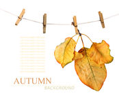 Bright autumn leaves on the old wooden background Royalty Free Stock Image