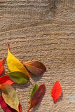 Bright Autumn Leaves on Rough Wood. Small bright autumn leaves on a rough wooden background with copy space Royalty Free Stock Image